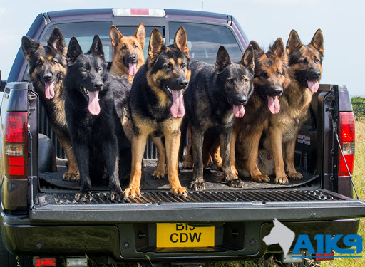 Image result for Personal Protection Dogs